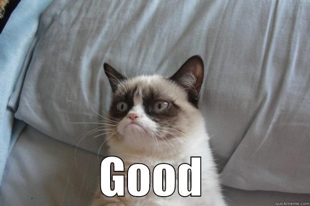 00321d2aa303083730d0cb14369fe7391384f07d381266a600dadac5cf7ba767 grumpy cat memes quickmeme