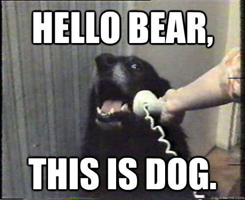 HELLO BEAR, THIS IS DOG.