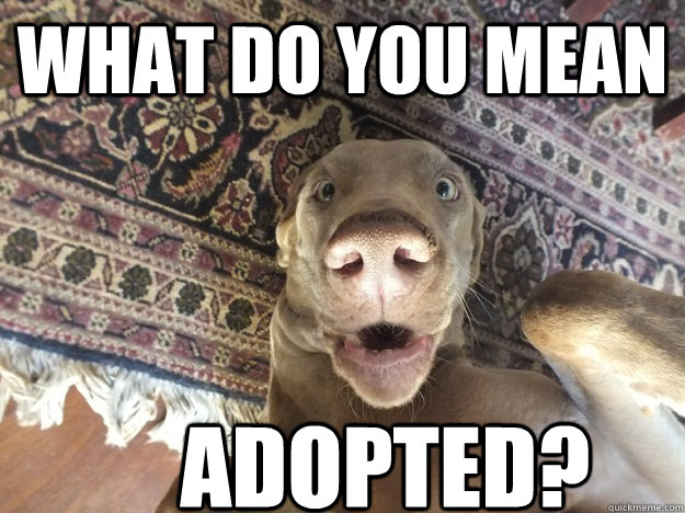 WHAT DO YOU MEAN adopted? - WHAT DO YOU MEAN adopted?  Misc