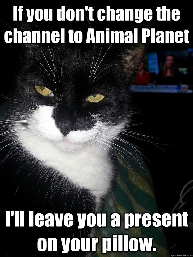 If you don't change the channel to Animal Planet I'll leave you a present on your pillow.