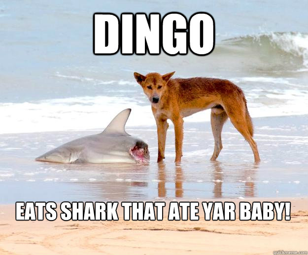 dingo eats shark that ate yar baby! - dingo eats shark that ate yar baby!  BABYEATER DINGO