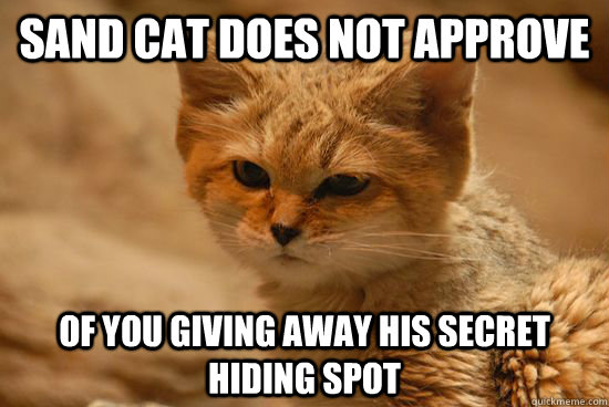 Sand Cat does not approve of you giving away his secret hiding spot - Sand Cat does not approve of you giving away his secret hiding spot  Sand Cat does not approve