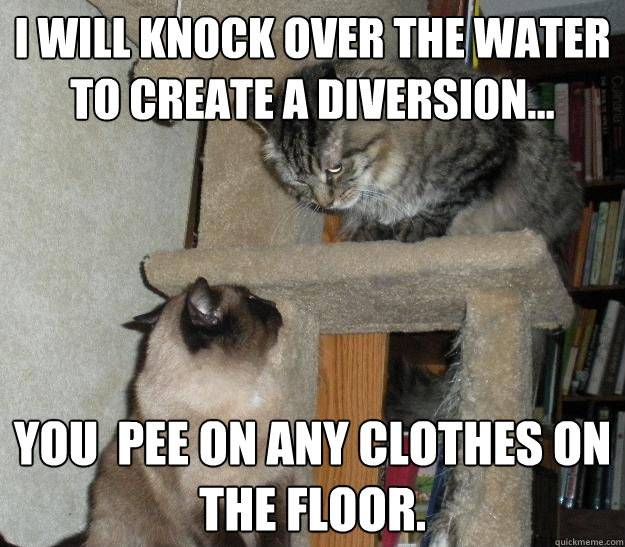 I will knock over the water to create a diversion... You  pee on any clothes on the floor.