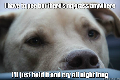 I have to pee but there's no grass anywhere I'll just hold it and cry all night long - I have to pee but there's no grass anywhere I'll just hold it and cry all night long  Misc