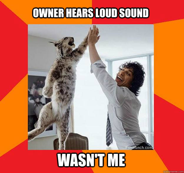 Owner hears loud sound Wasn't me