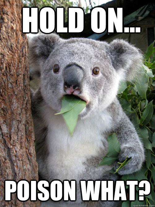 Hold On... Poison What?  koala bear