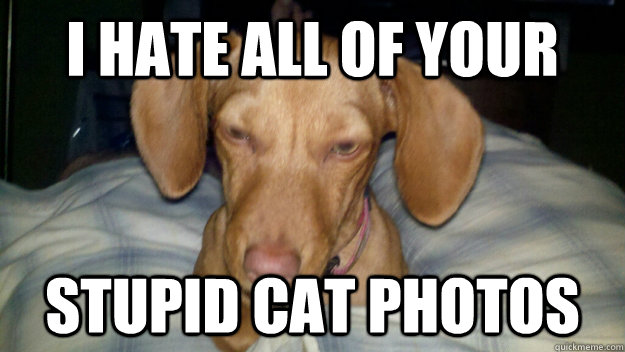 I hate all of your Stupid cat photos - I hate all of your Stupid cat photos  Misc