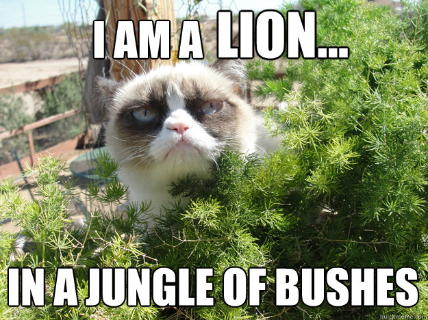 I am a  lion... in a jungle of bushes