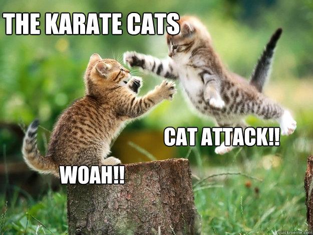 the karate cats __________________ cat attack!! woah!! - the karate cats __________________ cat attack!! woah!!  cute kittens