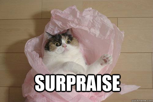 surpraise - surpraise  lolcat is lolicious