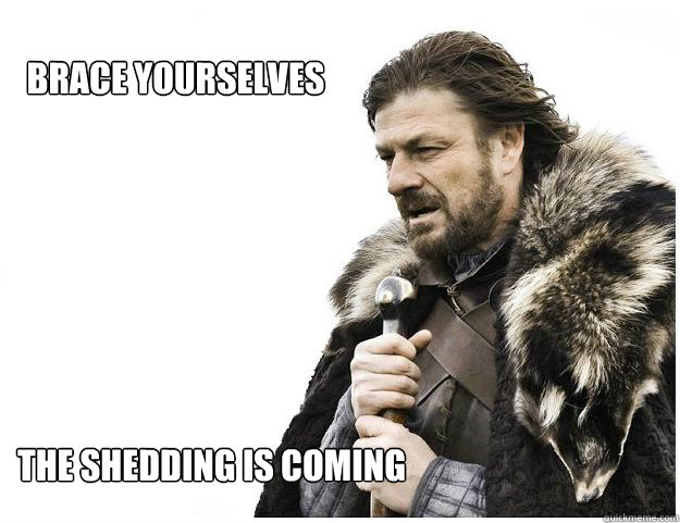 BRACE YOURSELVES The Shedding is coming - BRACE YOURSELVES The Shedding is coming  Imminent Ned
