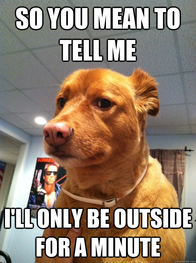So you mean to tell me  I'll only be outside for a minute - So you mean to tell me  I'll only be outside for a minute  Skeptical Dog