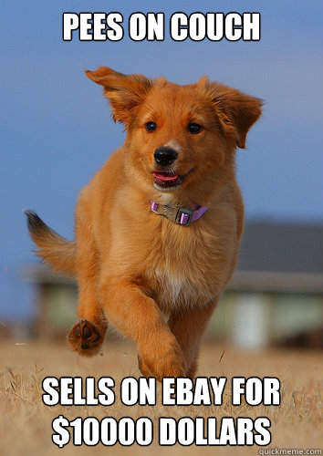 Pees on couch Sells on ebay for $10000 dollars - Pees on couch Sells on ebay for $10000 dollars  Ridiculously Photogenic Puppy