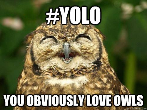 Image result for owl yolo meme