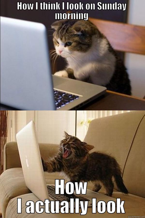 Sunday Morning Funny Meme : Sunday morning cats quickmeme