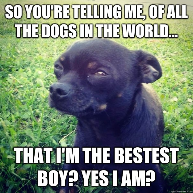 So you're telling me, of ALL the dogs in the world... That I'M the bestest boy? Yes I am? - So you're telling me, of ALL the dogs in the world... That I'M the bestest boy? Yes I am?  Skeptical Dog