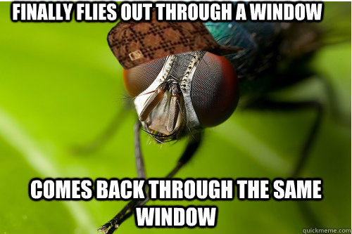 finally flies out through a window comes back through the same window - finally flies out through a window comes back through the same window  Scumbag Fly