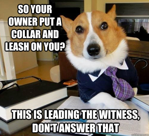 So your owner put a collar and leash on you? This is leading the witness, don't answer that - So your owner put a collar and leash on you? This is leading the witness, don't answer that  Lawyer Dog