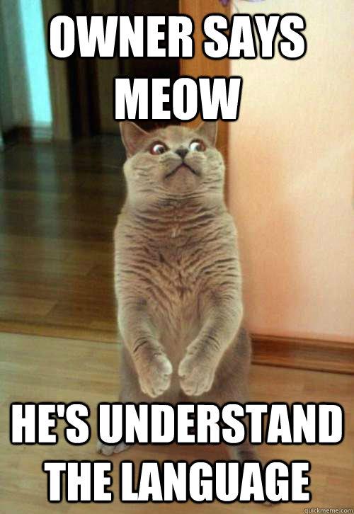 mau cat for sale