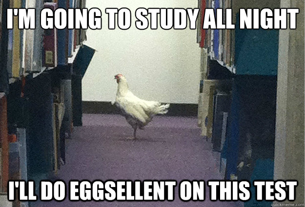 I'm going to study all night i'll do eggsellent on this test