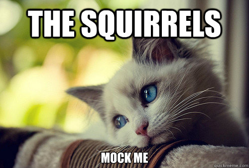 The Squirrels  mock me