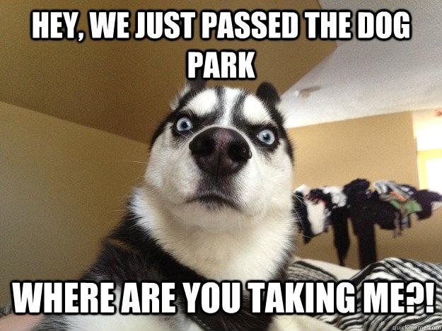 Dog Meme Husky Hey  we just passed the dog