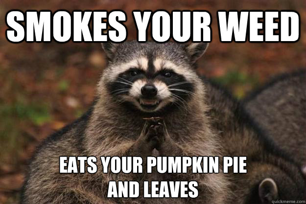 smokes your weed eats your pumpkin pie and leaves  - smokes your weed eats your pumpkin pie and leaves   Evil Plotting Raccoon