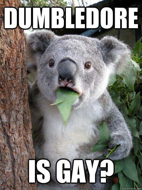 Koala Gay 38