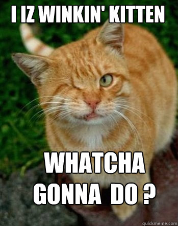 i iz winkin kitten whatcha gonna do winking cat quickmeme