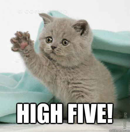 High five!   High Five Cat