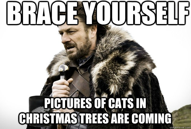 Brace Yourself Pictures of cats in christmas trees are coming ...