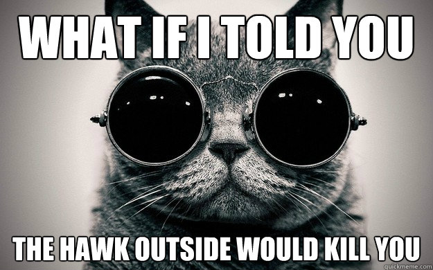 what if I told you the hawk outside would kill you - what if I told you the hawk outside would kill you  Morpheus Cat Facts