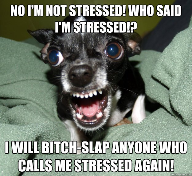 No I'm not stressed! Who said I'm stressed!? I will bitch-slap anyone who calls me stressed again! - No I'm not stressed! Who said I'm stressed!? I will bitch-slap anyone who calls me stressed again!  Chihuahua Logic