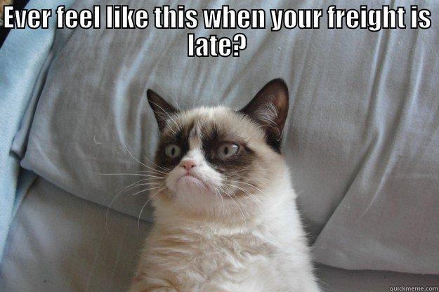 Grumpy Cat Memes Quickmeme