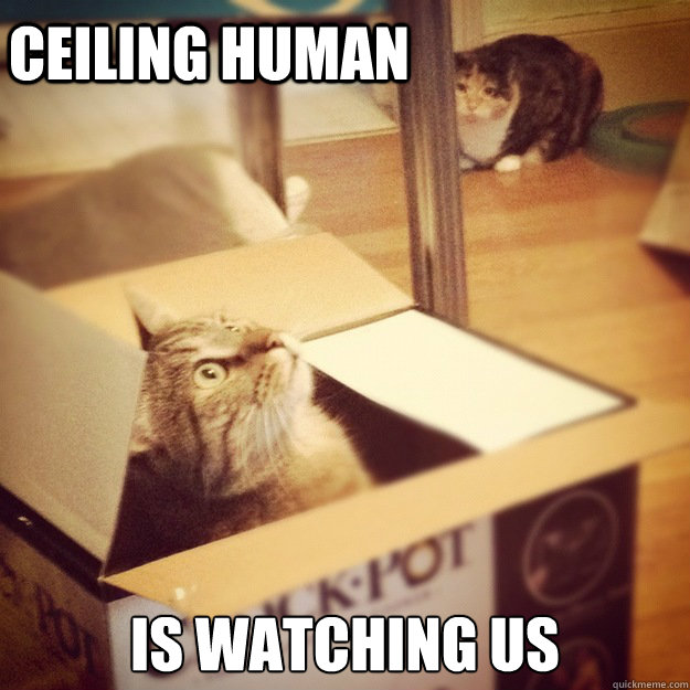 Ceiling Human is watching us