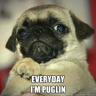 Everyday I'm Puglin