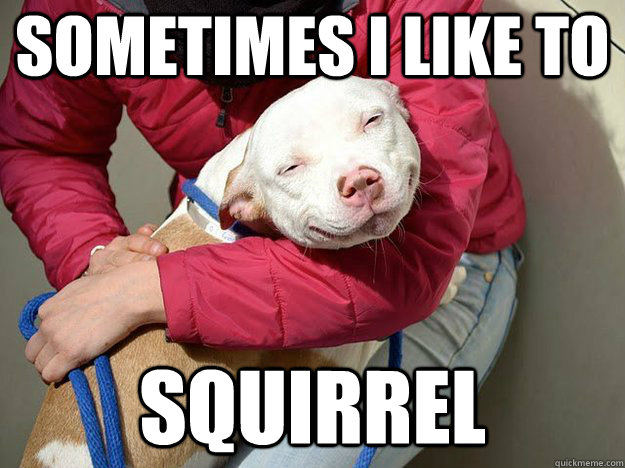 sometimes i like to  squirrel - sometimes i like to  squirrel  10 Dog