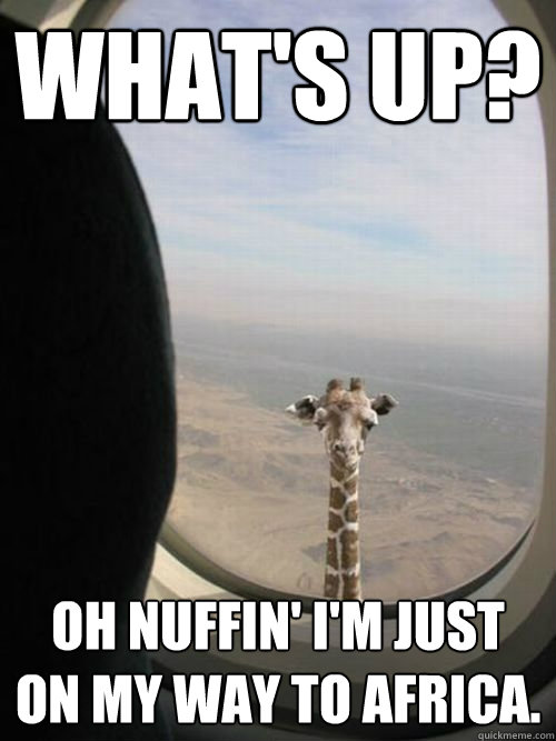 What's up? Oh nuffin' i'm just on my way to africa.
