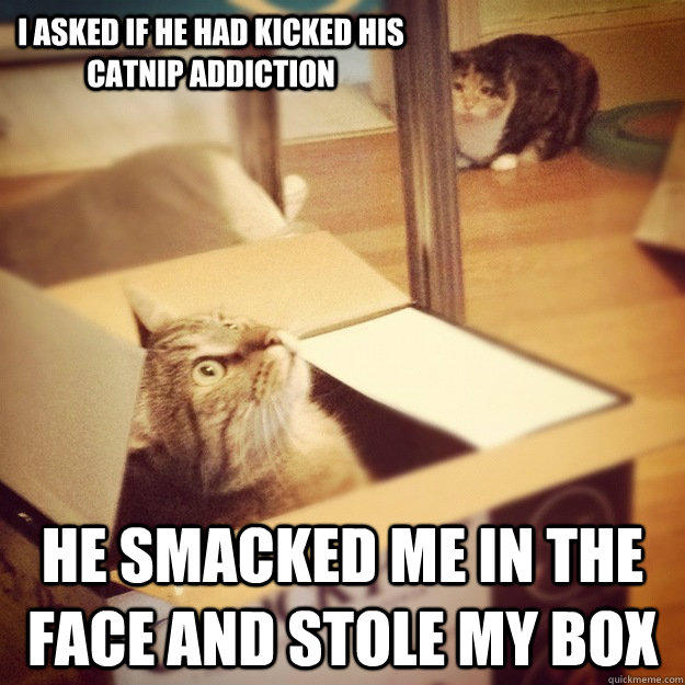 I asked if he had kicked his catnip addiction he smacked me in the face and stole my box  Cats wife