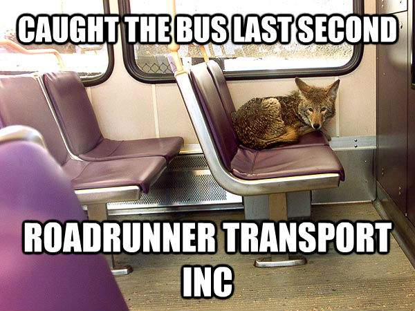 CAUGHT THE BUS LAST SECOND ROADRUNNER TRANSPORT INC - CAUGHT THE BUS LAST SECOND ROADRUNNER TRANSPORT INC  untitled meme