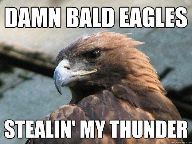 Damn bald eagles Stealin' my thunder - Damn bald eagles Stealin' my ...