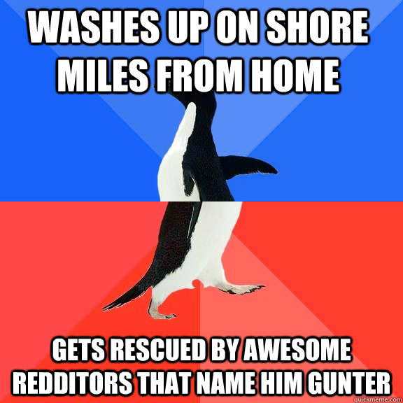 Washes up on shore miles from home  gets rescued by awesome redditors that name him gunter - Washes up on shore miles from home  gets rescued by awesome redditors that name him gunter  Socially Awkward Awesome Penguin