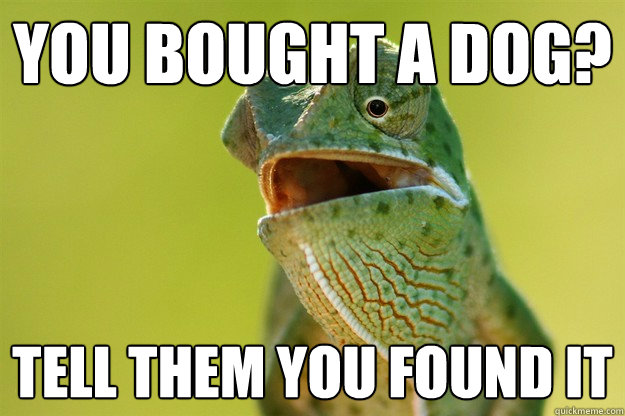 You bought a dog? Tell them you found it