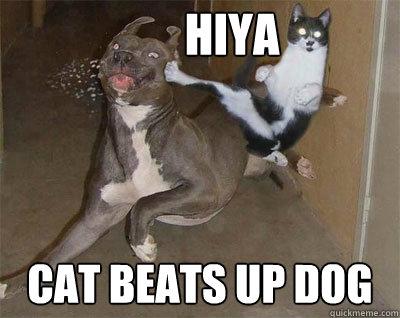 hiya cat beats up dog - hiya cat beats up dog  cat will always beat dogs