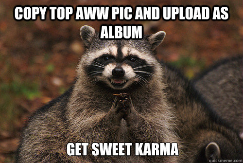 Copy top aww pic and upload as album Get sweet karma - Copy top aww pic and upload as album Get sweet karma  Insidious Racoon 2