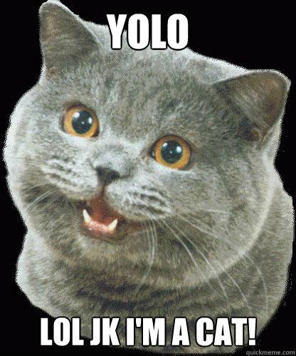 YOLO LOL JK I'M A CAT!