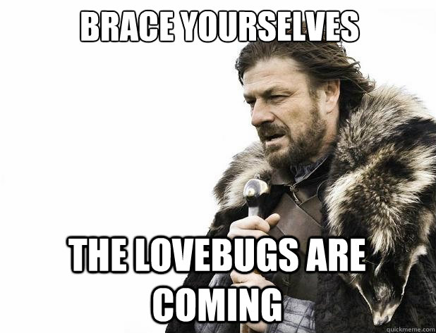 Brace yourselves The lovebugs are coming - Brace yourselves The lovebugs are coming  Misc