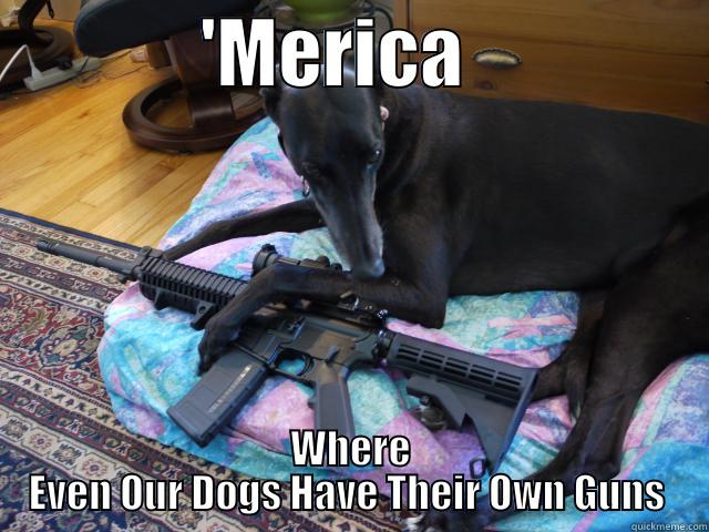 'MERICA                 WHERE EVEN OUR DOGS HAVE THEIR OWN GUNS  Misc