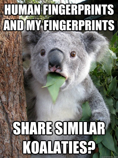 human fingerprints and my fingerprints share similar koalaties?  koala bear