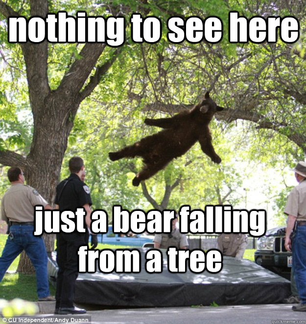 nothing to see here just a bear falling from a tree  falling bear
